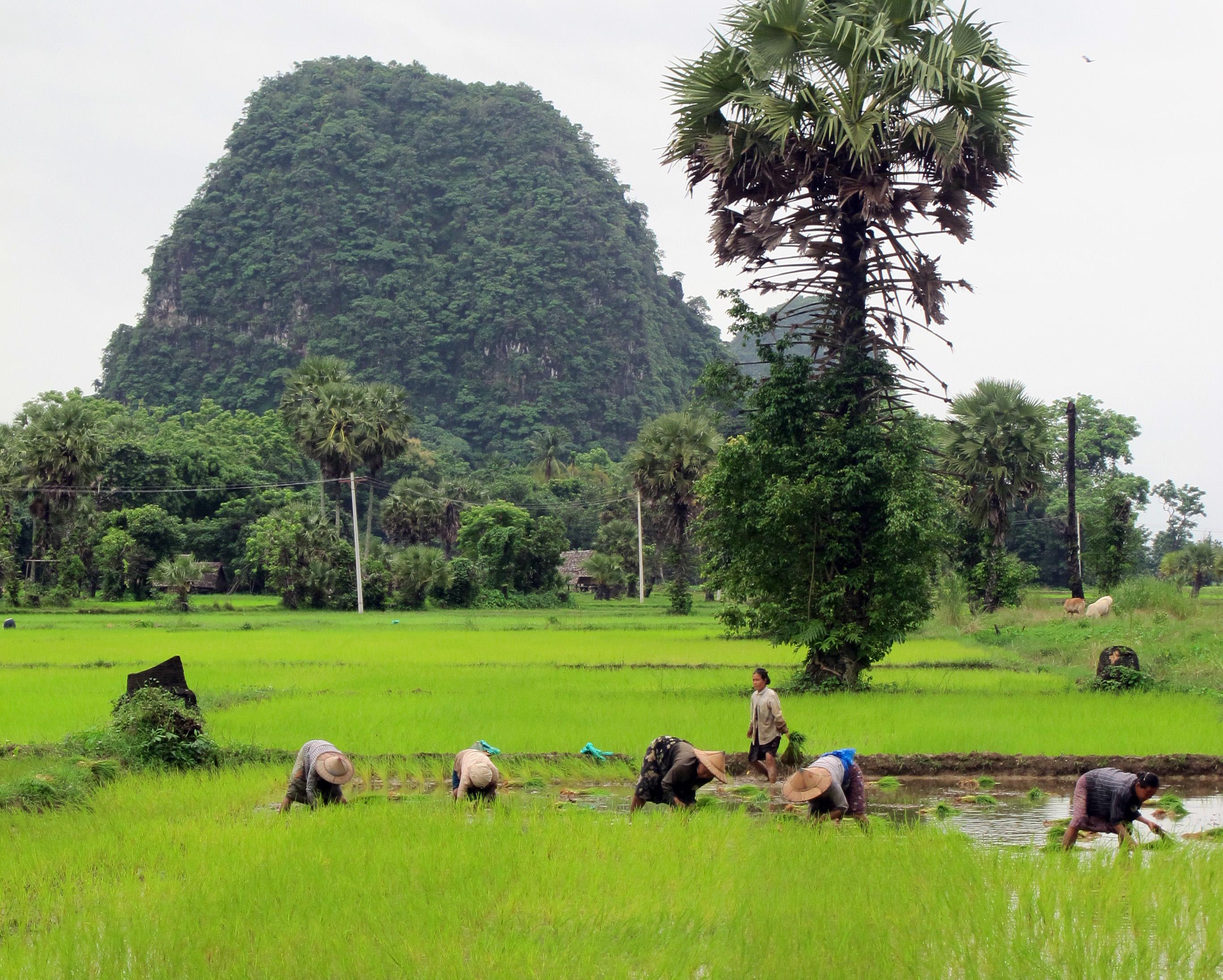 Dags att rakna alla oar i indonesien